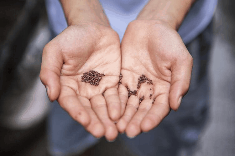 Seeds Used in Indian Cuisine
